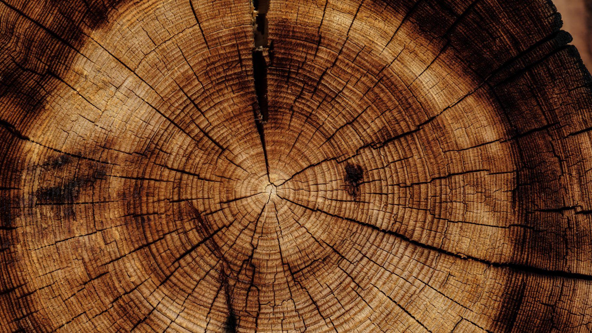Naturholzkunst